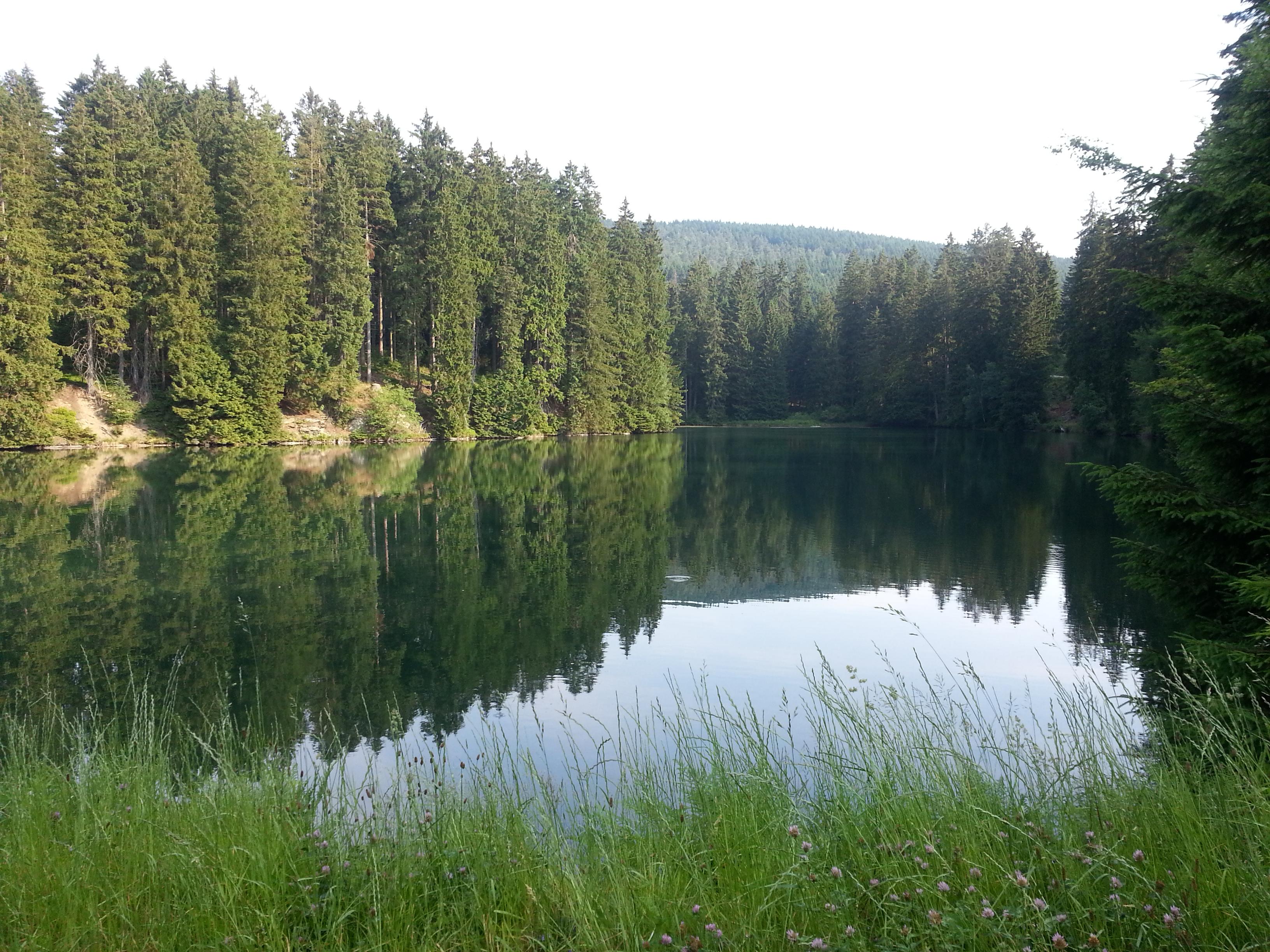 Unterer Schalker Teich